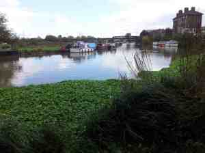 Clapton river Lea and greenery small